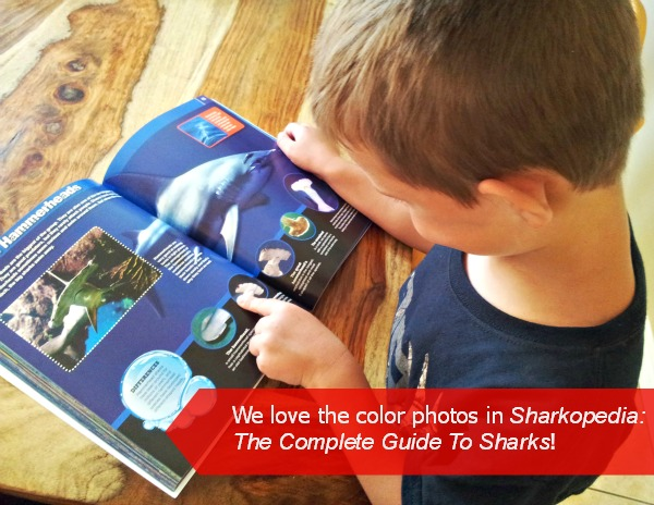 Shark Book The Discovery Channel